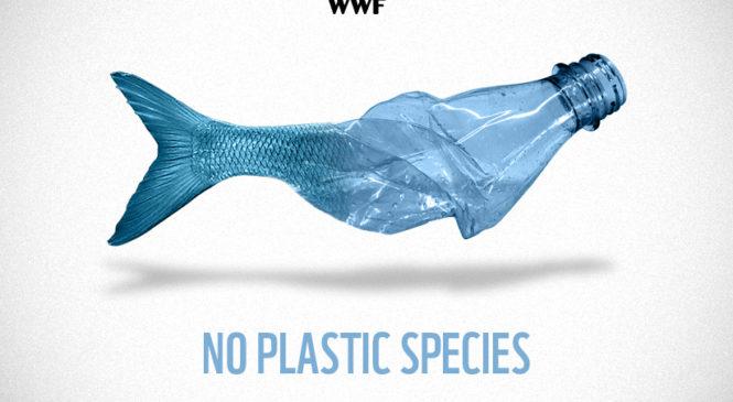 Il Wwf per un mare senza plastiche